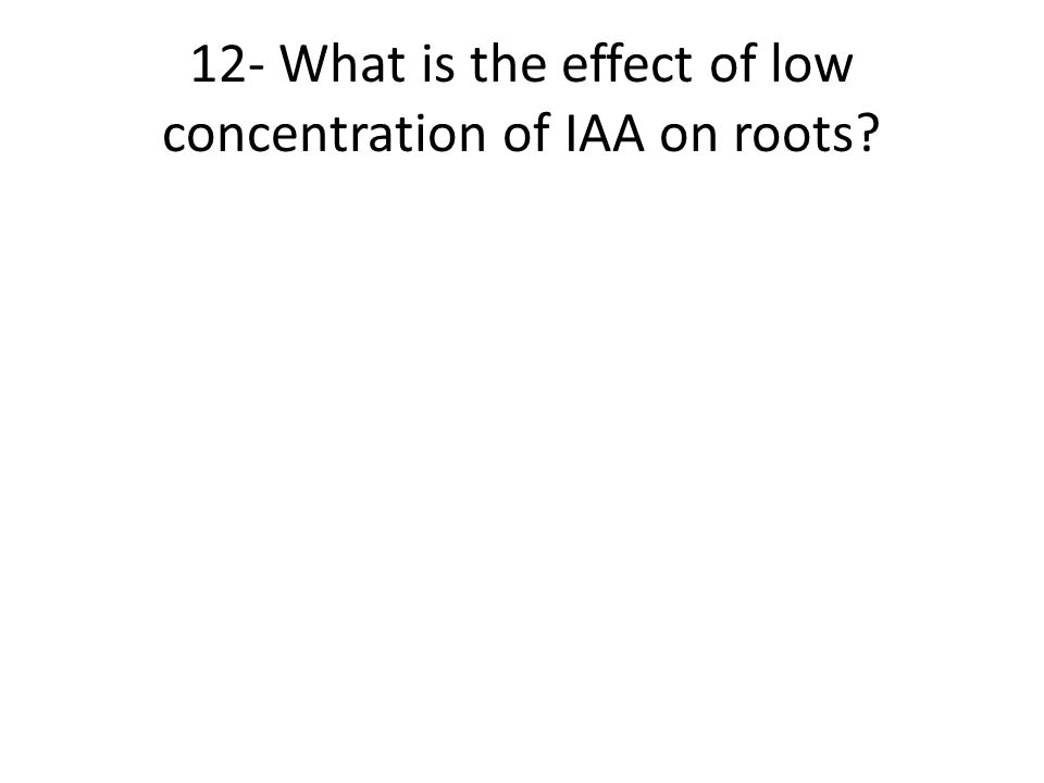 12- What is the effect of low concentration of IAA on roots