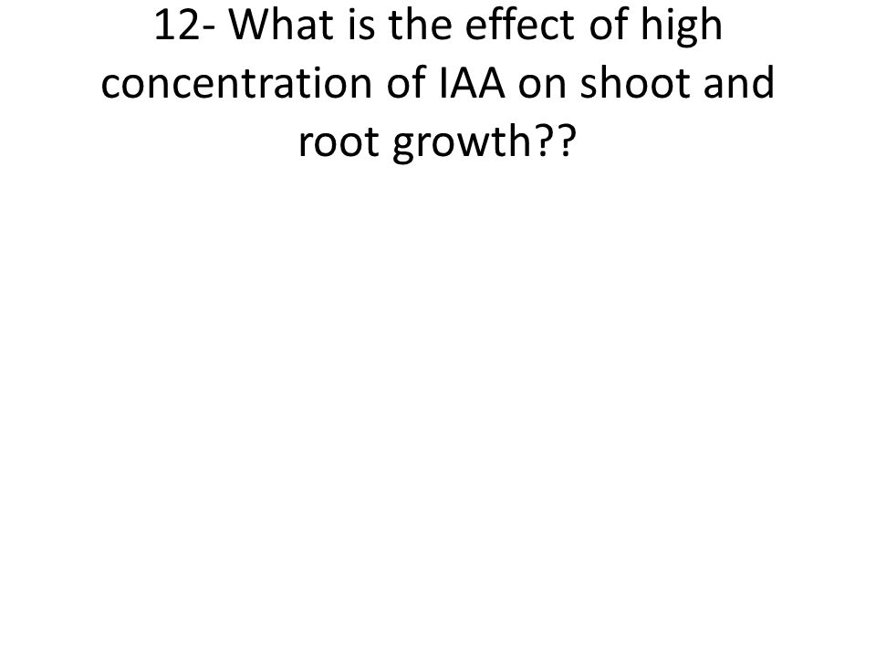 12- What is the effect of high concentration of IAA on shoot and root growth