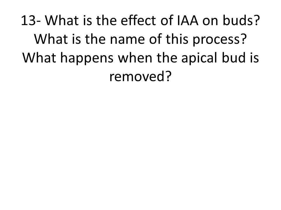 13- What is the effect of IAA on buds? What is the name of this process? What happens when the apical bud is removed?