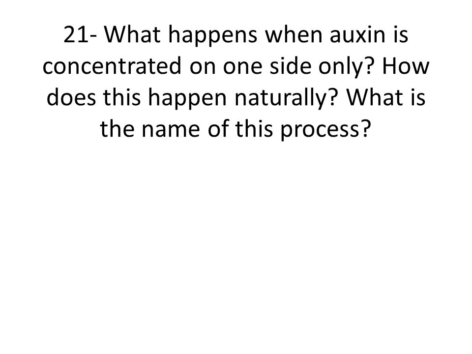 21- What happens when auxin is concentrated on one side only.