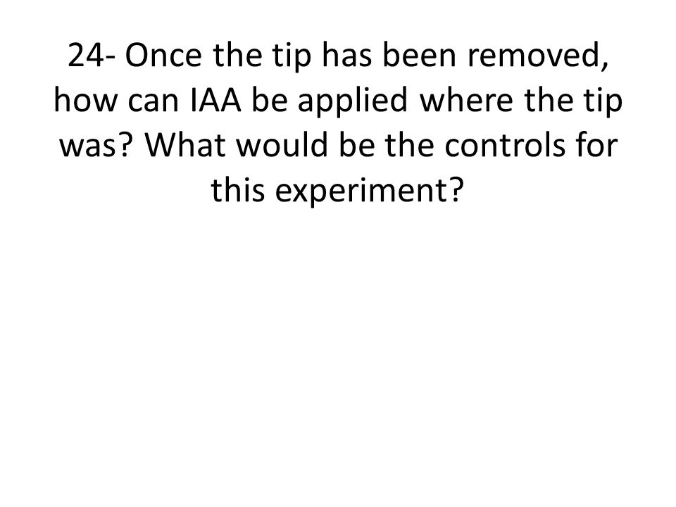 24- Once the tip has been removed, how can IAA be applied where the tip was? What would be the controls for this experiment?