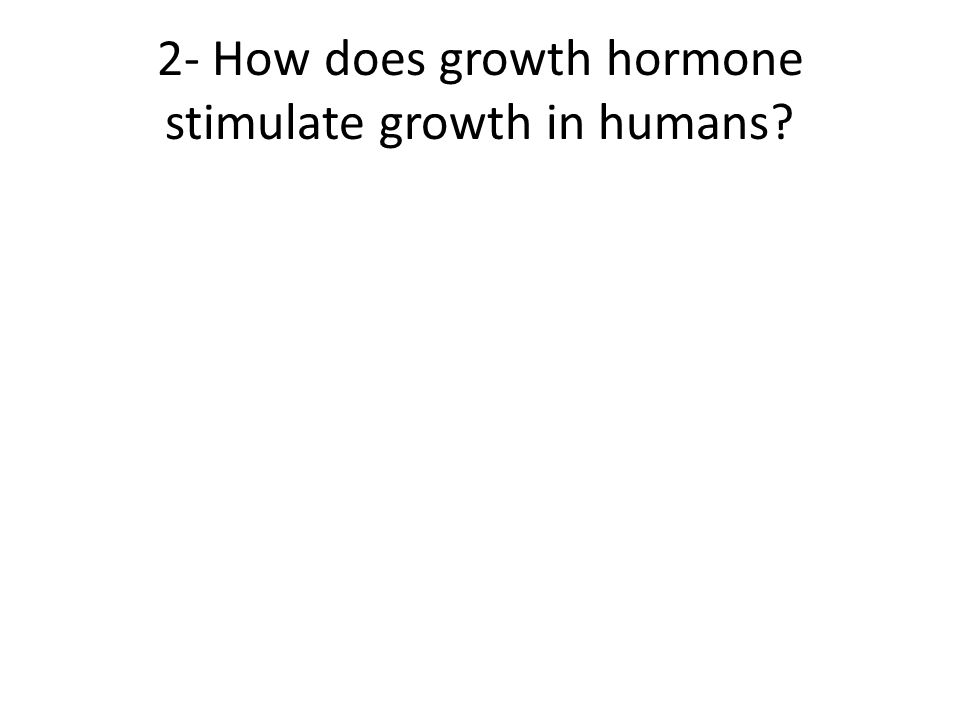 2- How does growth hormone stimulate growth in humans