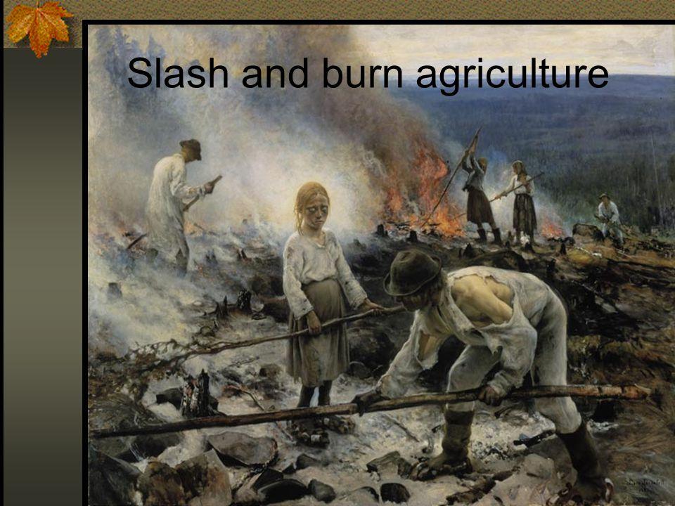 Slash and burn agriculture