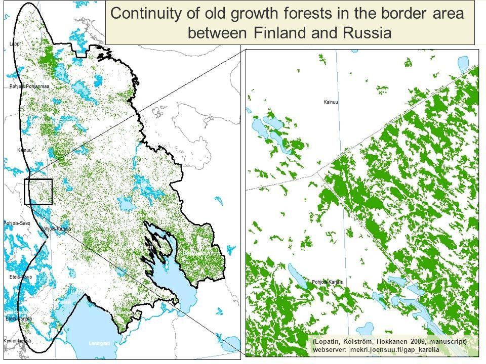 (Lopatin, Kolström, Hokkanen 2009, manuscript) webserver: mekri.joensuu.fi/gap_karelia Continuity of old growth forests in the border area between Finland and Russia