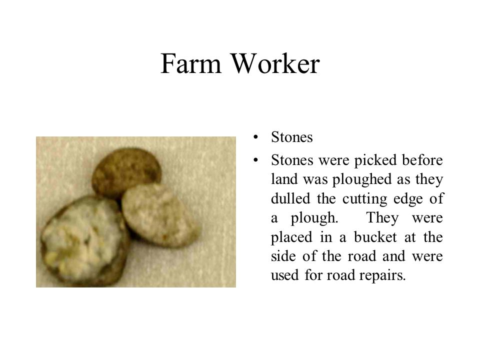 Farm Worker Stones Stones were picked before land was ploughed as they dulled the cutting edge of a plough.