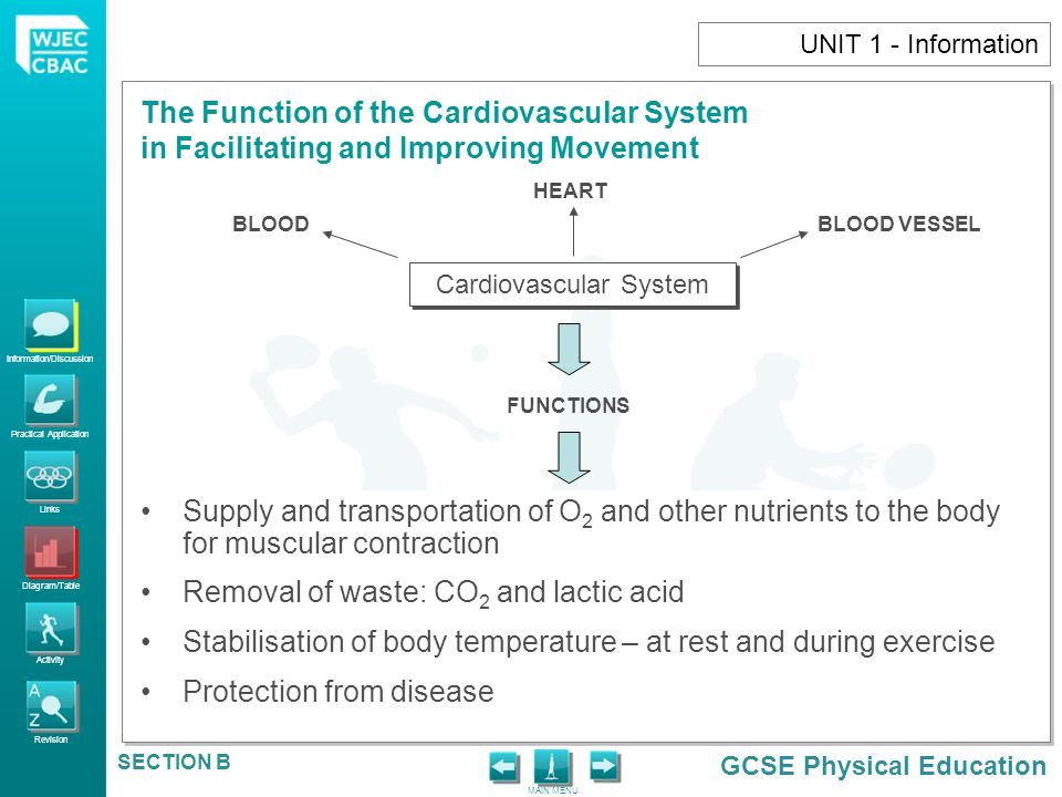 Information/Discussion Practical Application Links Diagram/Table Activity Revision GCSE Physical Education The Function of the Cardiovascular System in Facilitating and Improving Movement MAIN MENU SECTION B UNIT 1 - Information BLOOD PRESSURE Blood flow to the muscles and the skin will increase during exercise.