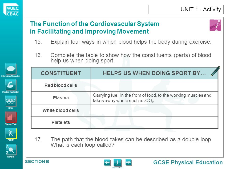 Information/Discussion Practical Application Links Diagram/Table Activity Revision GCSE Physical Education The Function of the Cardiovascular System i