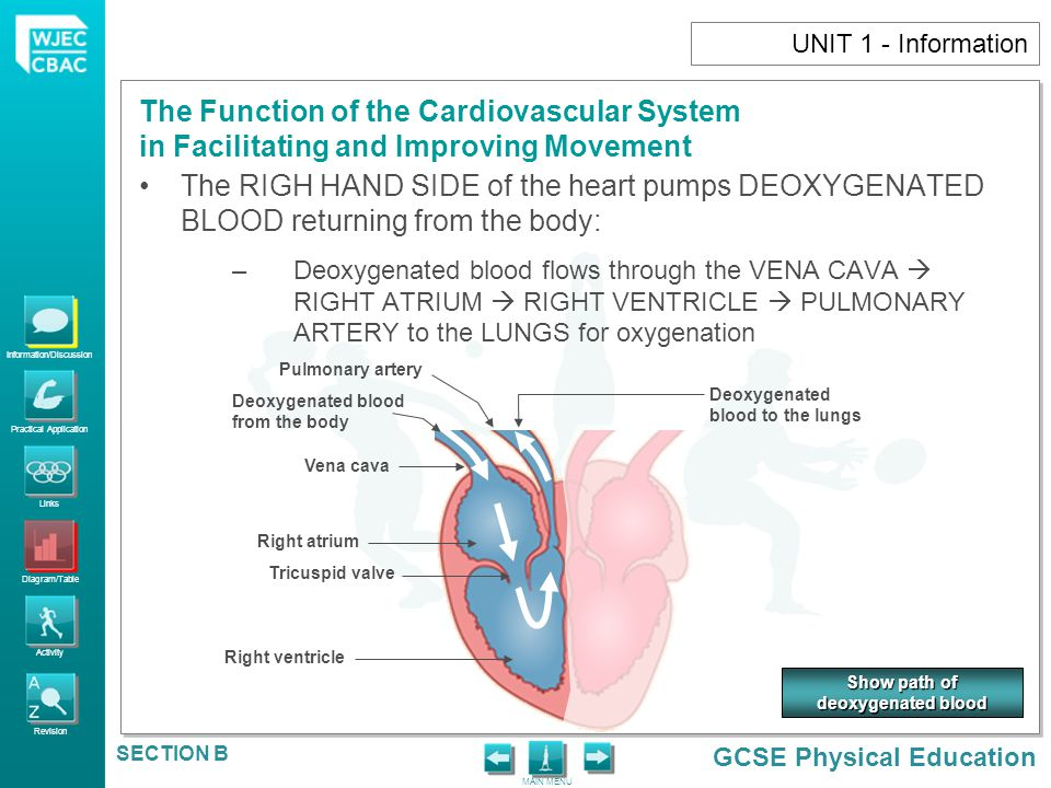 Information/Discussion Practical Application Links Diagram/Table Activity Revision GCSE Physical Education The Function of the Cardiovascular System in Facilitating and Improving Movement MAIN MENU SECTION B UNIT 1 - Activity 15.Explain four ways in which blood helps the body during exercise.