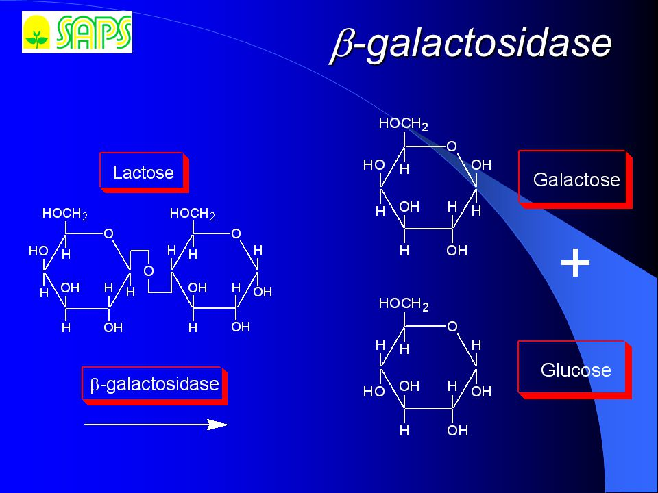  -galactosidase