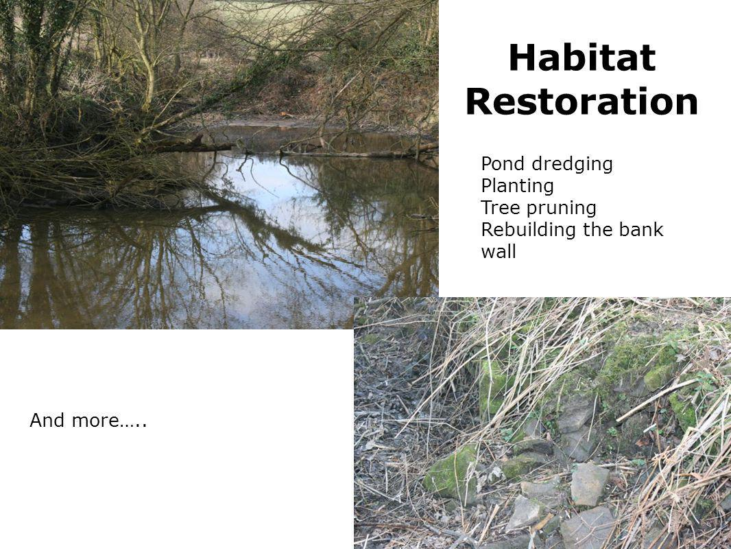 Habitat Restoration Pond dredging Planting Tree pruning Rebuilding the bank wall And more…..