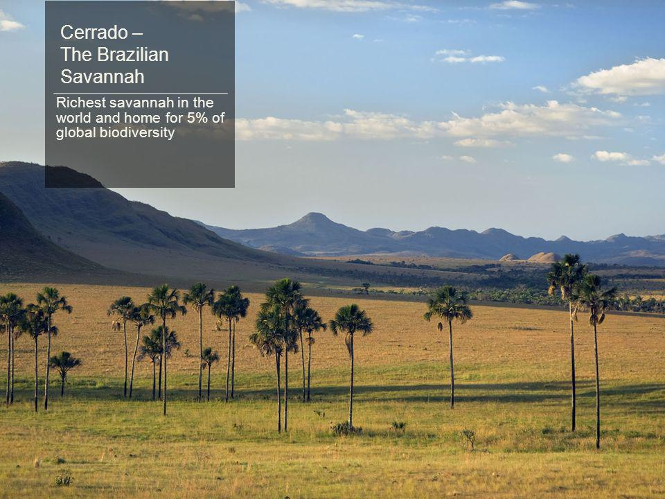 Cerrado – The Brazilian Savannah Richest savannah in the world and home for 5% of global biodiversity