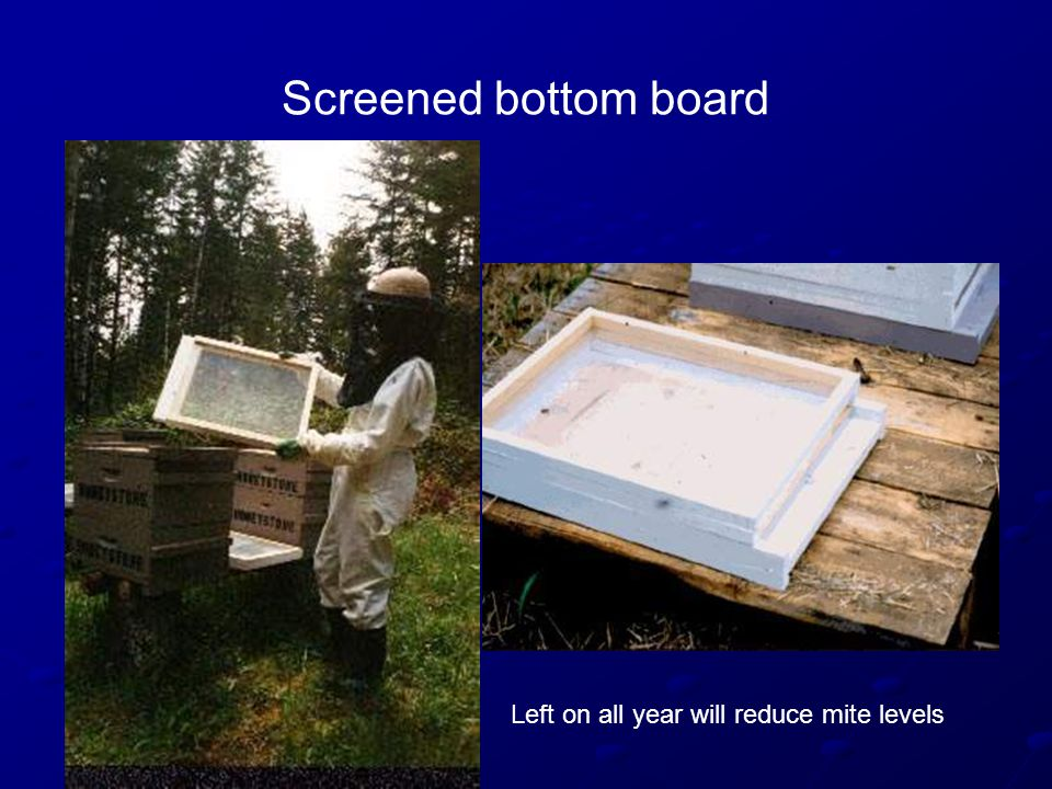 Screened bottom board Left on all year will reduce mite levels