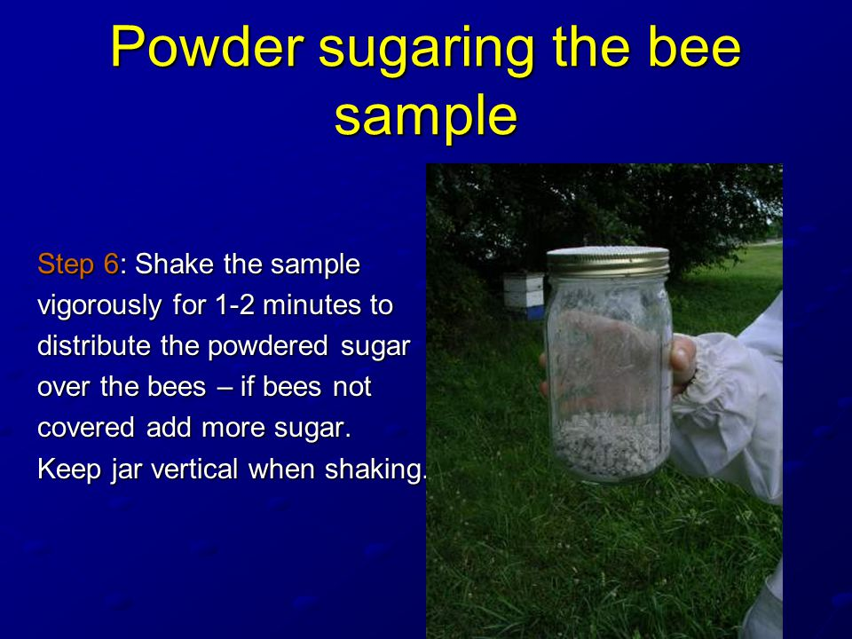 Powder sugaring the bee sample Step 6: Shake the sample vigorously for 1-2 minutes to distribute the powdered sugar over the bees – if bees not covered add more sugar.