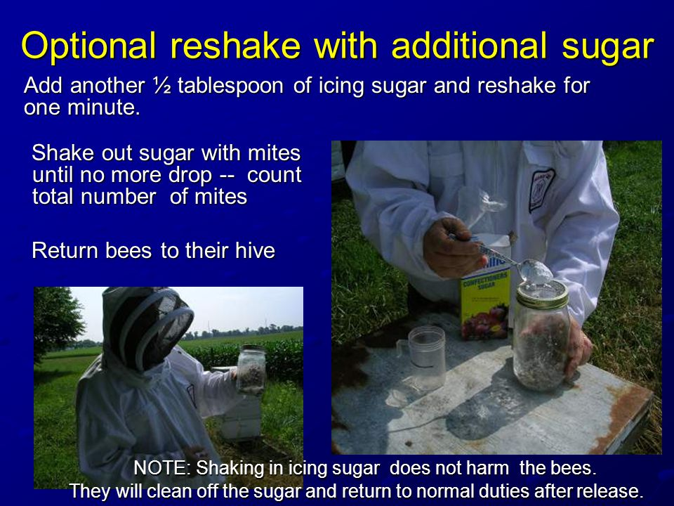Optional reshake with additional sugar Shake out sugar with mites until no more drop -- count total number of mites Shake out sugar with mites until no more drop -- count total number of mites Return bees to their hive Return bees to their hive NOTE: Shaking in icing sugar does not harm the bees.