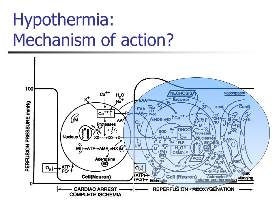Hypothermia: Mechanism of action?
