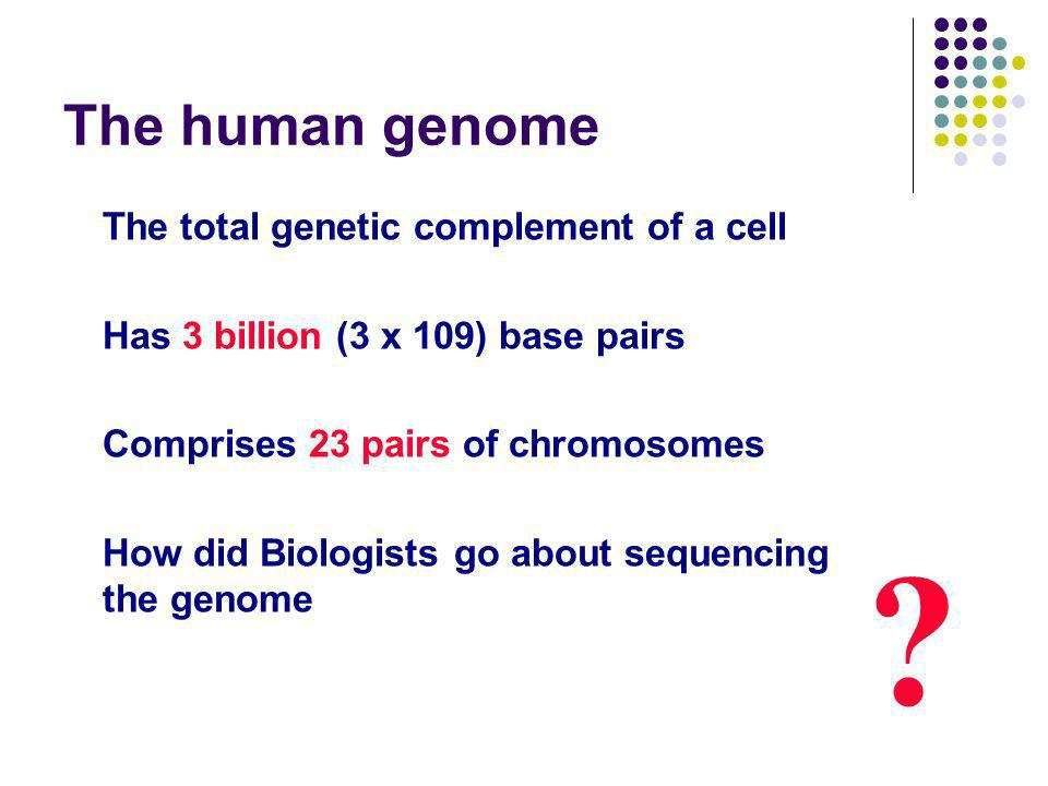 The human genome The total genetic complement of a cell Has 3 billion (3 x 109) base pairs Comprises 23 pairs of chromosomes How did Biologists go about sequencing the genome ?
