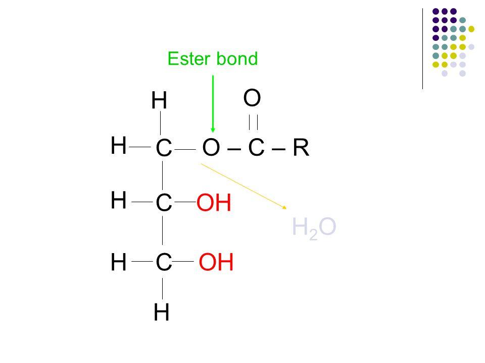 C C C H H H H H O – C – R O H2OH2O Ester bond