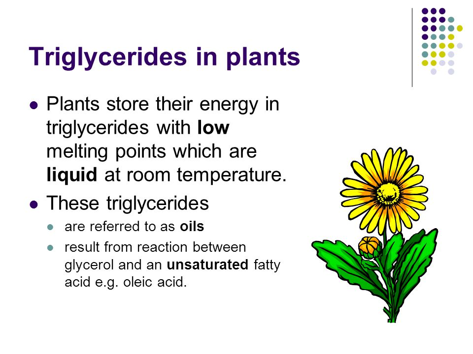 Triglycerides in plants Plants store their energy in triglycerides with low melting points which are liquid at room temperature.