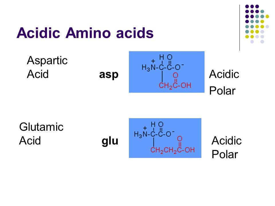Acidic Amino acids Aspartic AcidaspAcidic Polar Glutamic AcidgluAcidic Polar