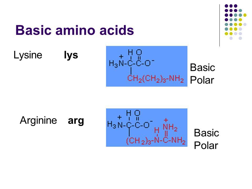 Basic amino acids Lysinelys Basic Polar Argininearg Basic Polar
