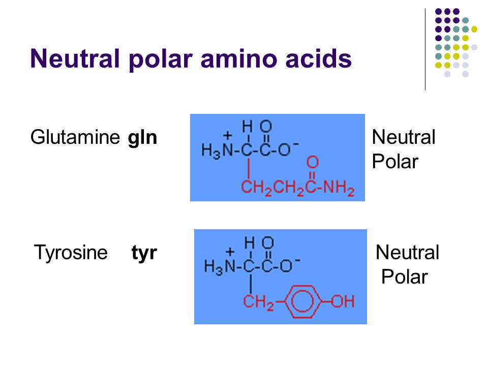 Neutral polar amino acids GlutamineglnNeutral Polar Tyrosine tyr Neutral Polar