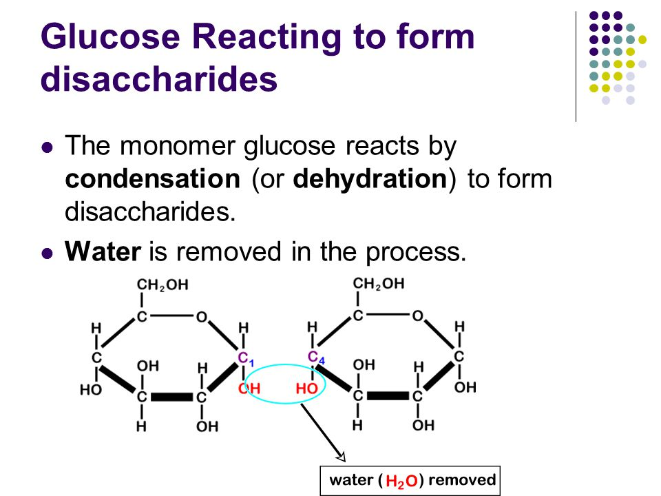 Glucose Reacting to form disaccharides The monomer glucose reacts by condensation (or dehydration) to form disaccharides.