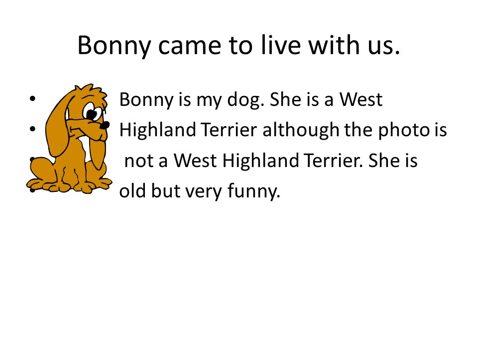 Bonny came to live with us. Bonny is my dog. She is a West Highland Terrier although the photo is not a West Highland Terrier. She is old but very fun