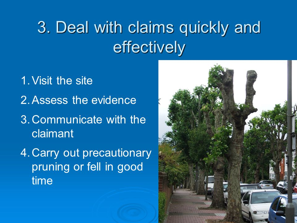 Trees covered by a TPO