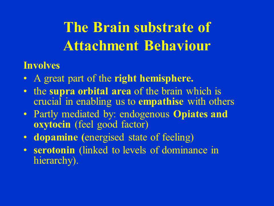 The Brain substrate of Attachment Behaviour Involves A great part of the right hemisphere. the supra orbital area of the brain which is crucial in ena