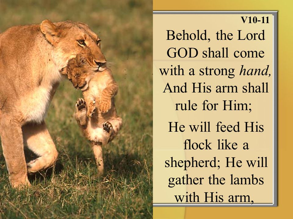 V10-11 Behold, the Lord GOD shall come with a strong hand, And His arm shall rule for Him; He will feed His flock like a shepherd; He will gather the