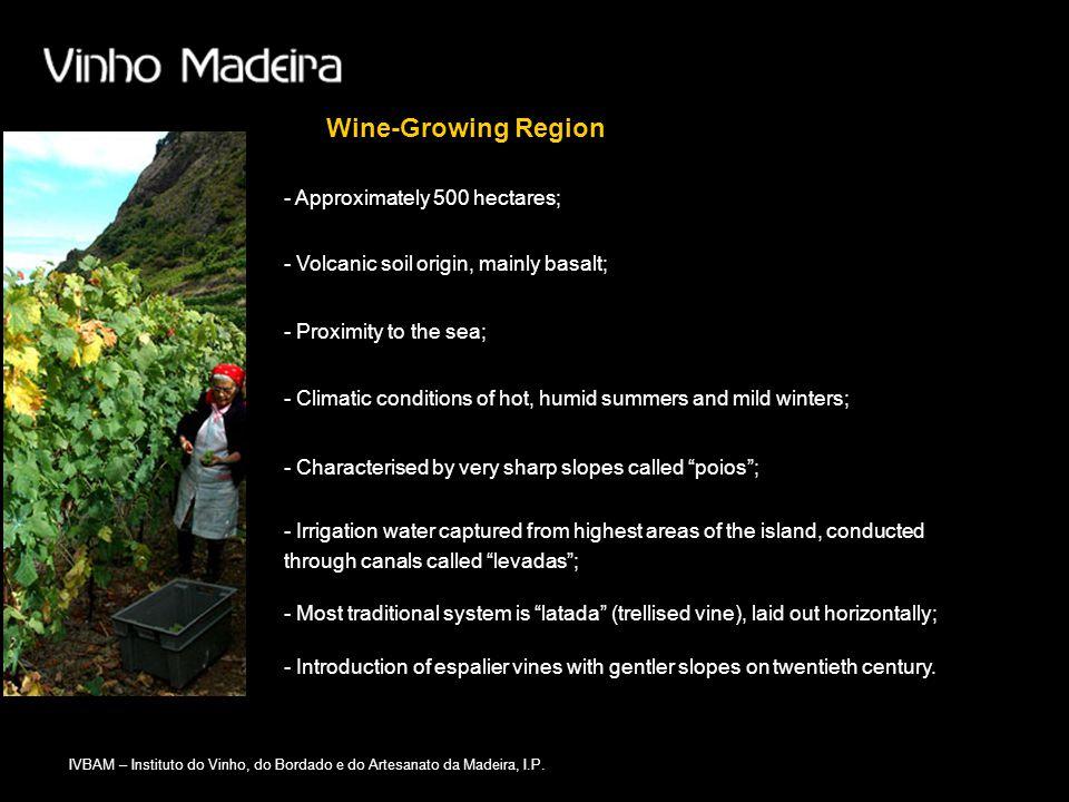 IVBAM – Instituto do Vinho, do Bordado e do Artesanato da Madeira, I.P. - Introduction of espalier vines with gentler slopes on twentieth century. Win