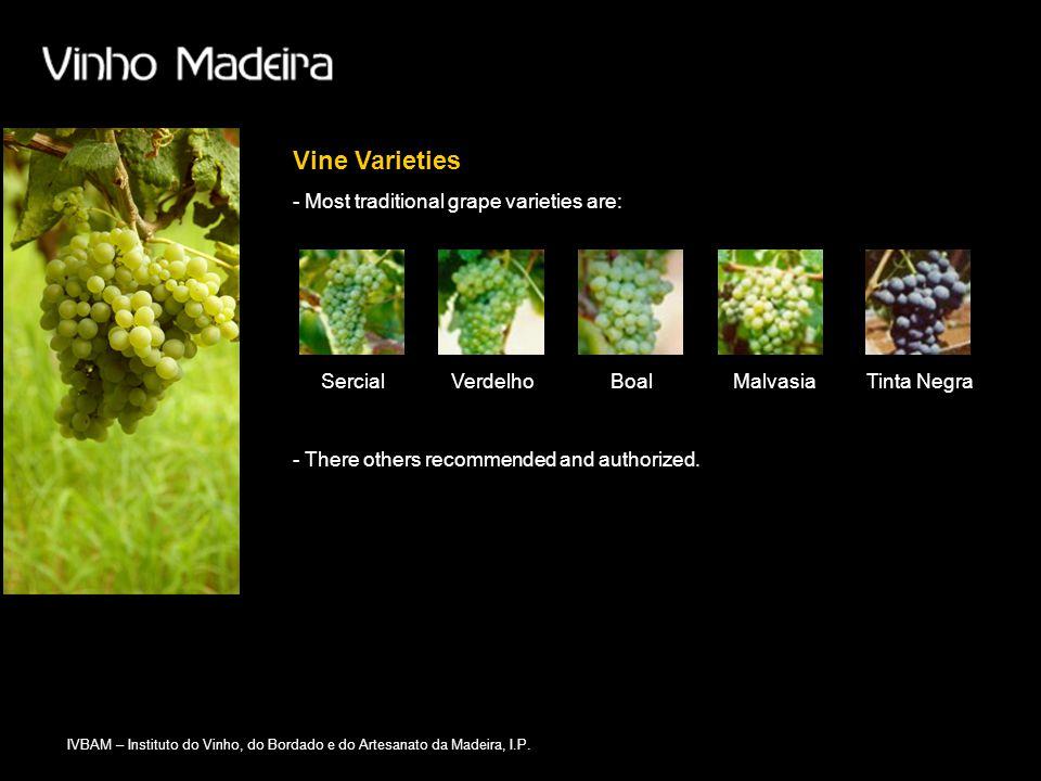 IVBAM – Instituto do Vinho, do Bordado e do Artesanato da Madeira, I.P. Vine Varieties SercialVerdelhoBoalMalvasiaTinta Negra - There others recommend