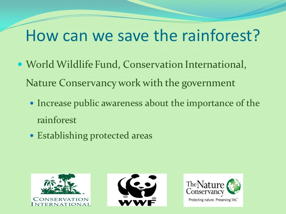 How can we save the rainforest? World Wildlife Fund, Conservation International, Nature Conservancy work with the government Increase public awareness