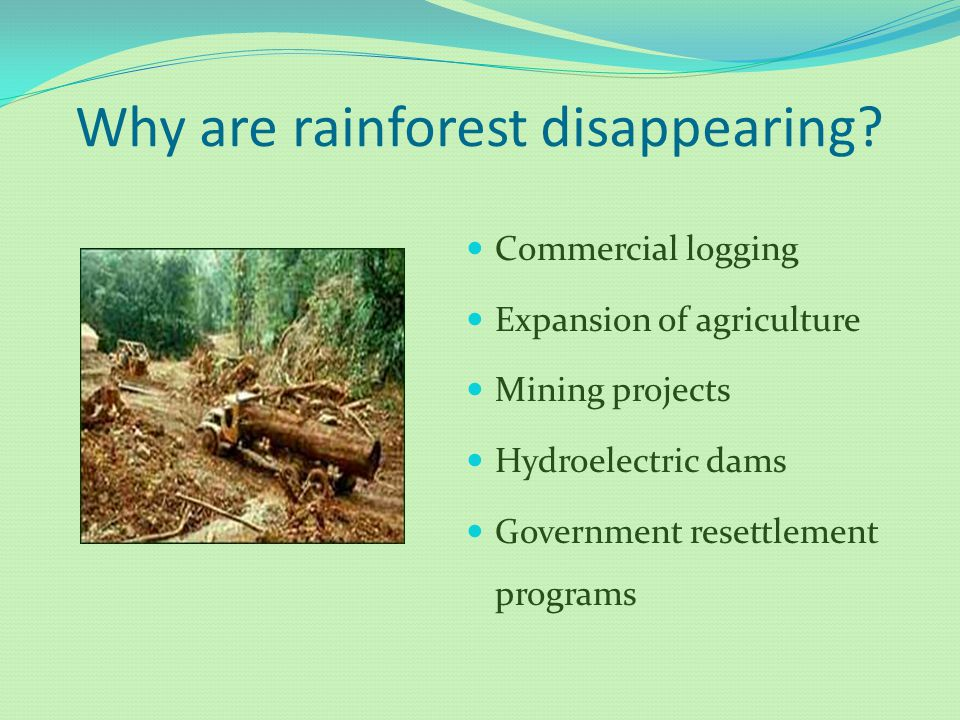 Why are rainforest disappearing? Commercial logging Expansion of agriculture Mining projects Hydroelectric dams Government resettlement programs