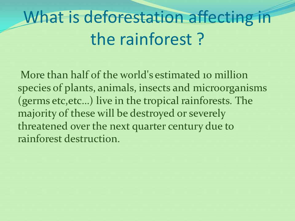 What is deforestation affecting in the rainforest ? More than half of the world's estimated 10 million species of plants, animals, insects and microor