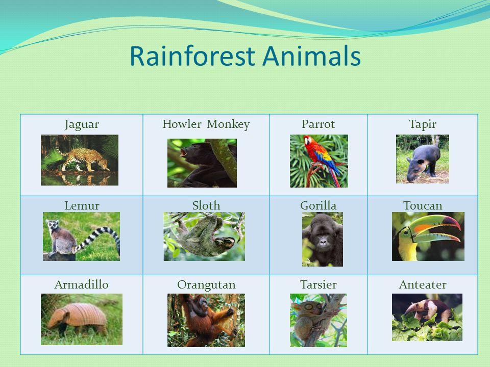 Rainforest Animals JaguarHowler MonkeyParrotTapir LemurSlothGorillaToucan ArmadilloOrangutanTarsierAnteater