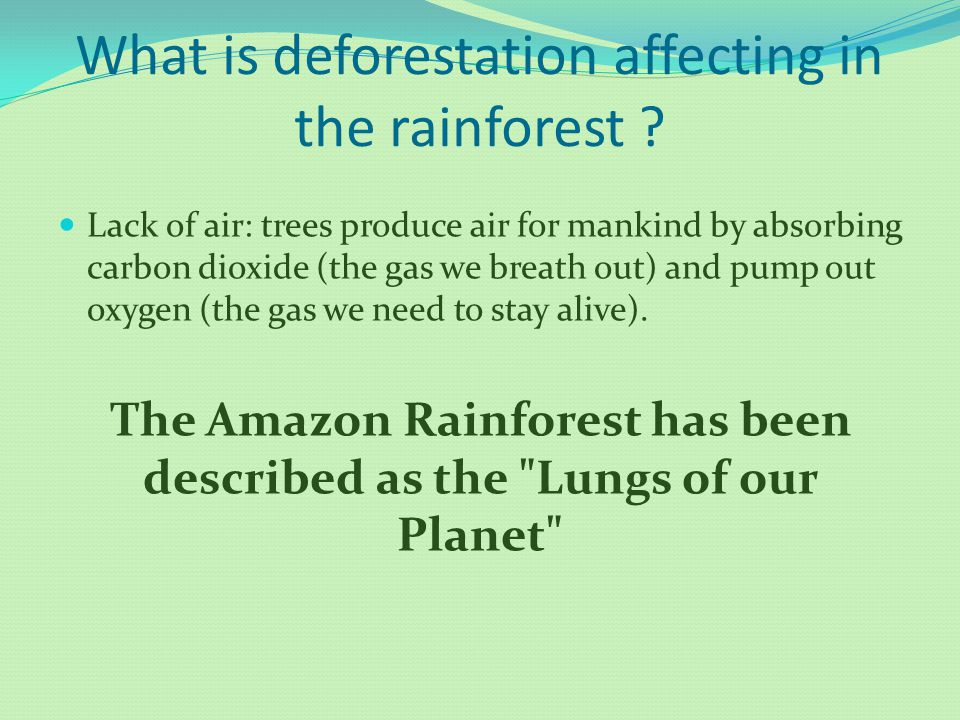 What is deforestation affecting in the rainforest ? Lack of air: trees produce air for mankind by absorbing carbon dioxide (the gas we breath out) and