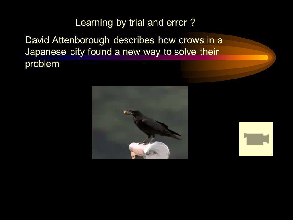 Learning by trial and error ? David Attenborough describes how crows in a Japanese city found a new way to solve their problem