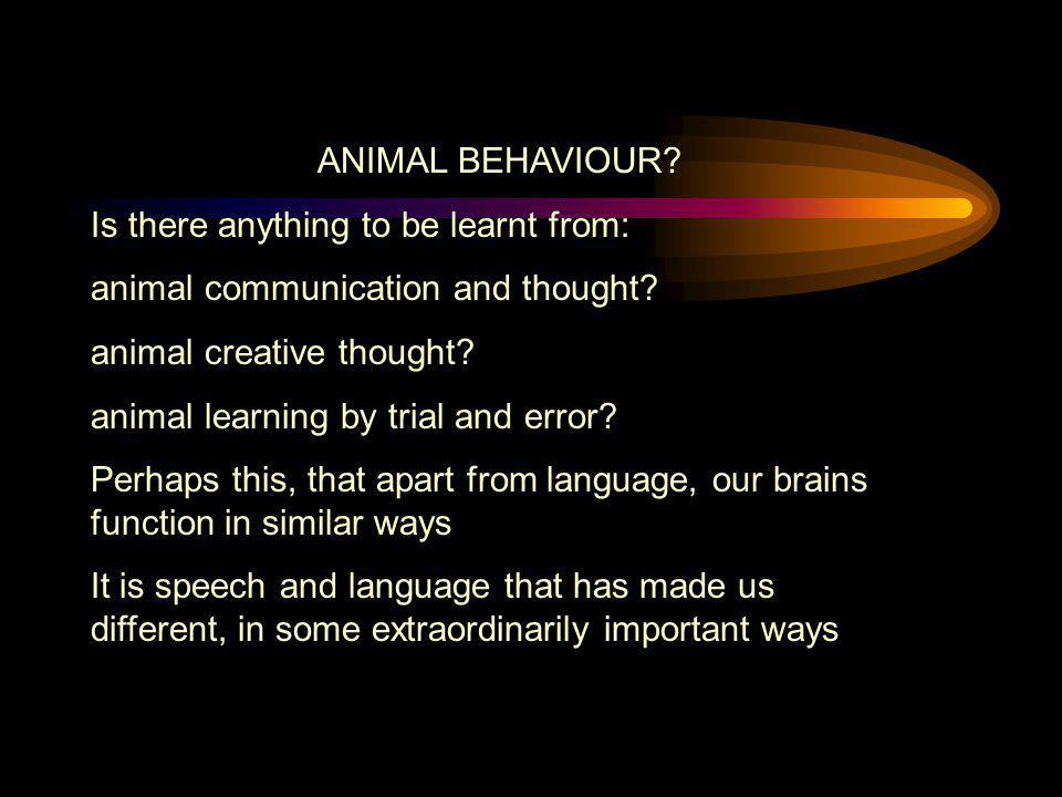 ANIMAL BEHAVIOUR? Is there anything to be learnt from: animal communication and thought? animal creative thought? animal learning by trial and error?
