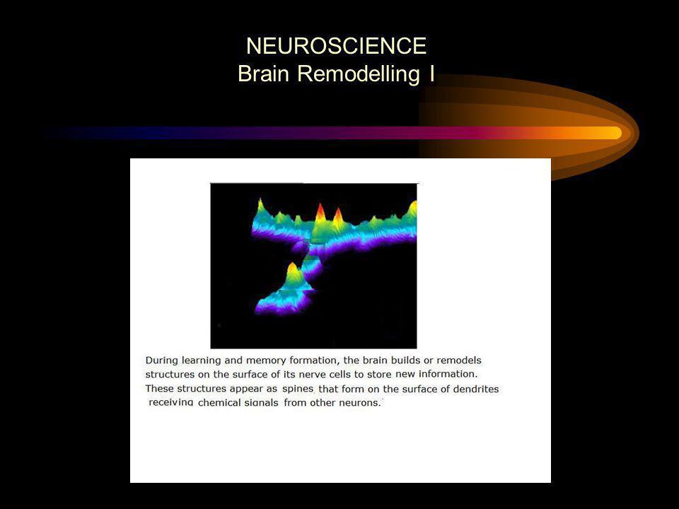 NEUROSCIENCE Brain Remodelling I