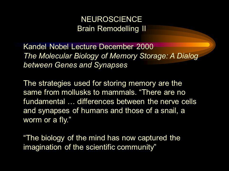 NEUROSCIENCE Brain Remodelling II Kandel Nobel Lecture December 2000 The Molecular Biology of Memory Storage: A Dialog between Genes and Synapses The