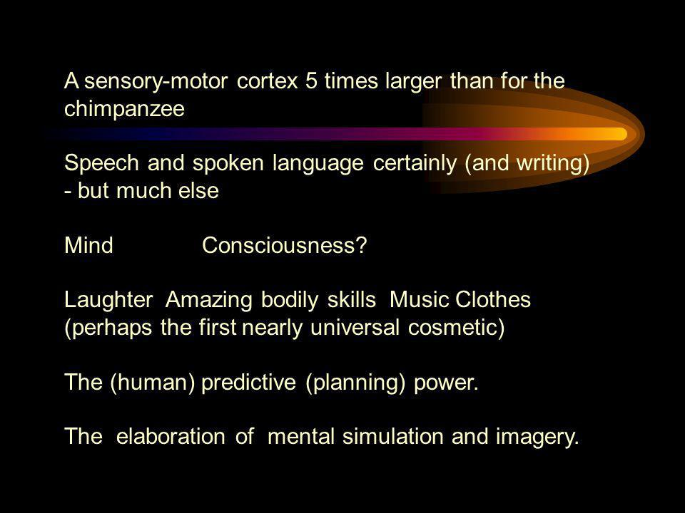 A sensory-motor cortex 5 times larger than for the chimpanzee Speech and spoken language certainly (and writing) - but much else Mind Consciousness? L