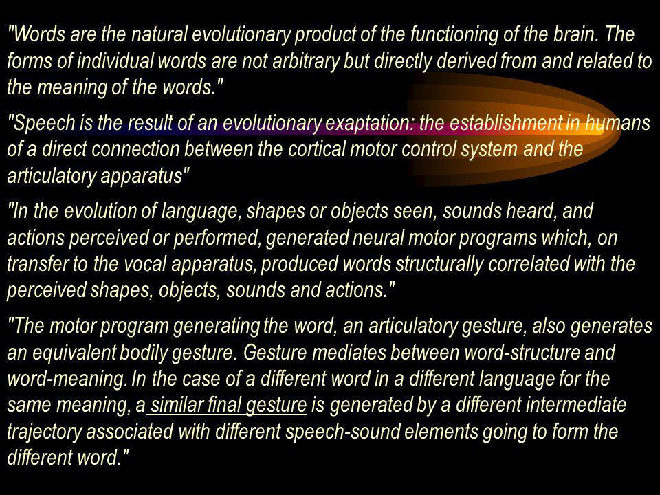 The key aspect of the motor theory of language is that words, speech and language are the outcome of an exaptation of the motor control system, that is, a direct relation between aspects of the motor cortical system and the characteristic features of lexicon and syntax.