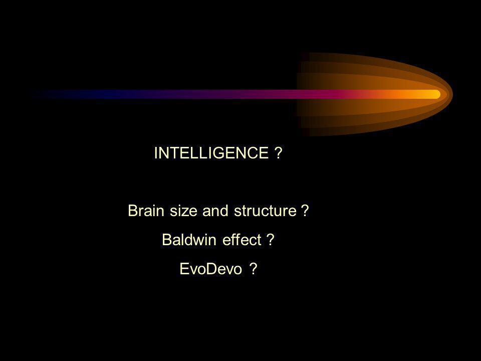 INTELLIGENCE ? Brain size and structure ? Baldwin effect ? EvoDevo ?
