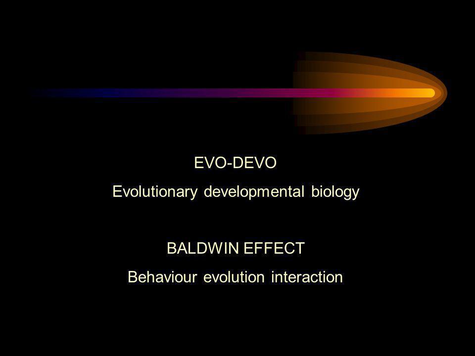 EVO-DEVO Evolutionary developmental biology BALDWIN EFFECT Behaviour evolution interaction