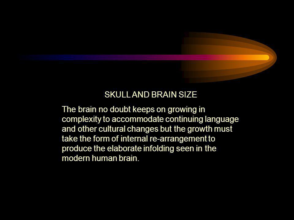 SKULL AND BRAIN SIZE The brain no doubt keeps on growing in complexity to accommodate continuing language and other cultural changes but the growth mu