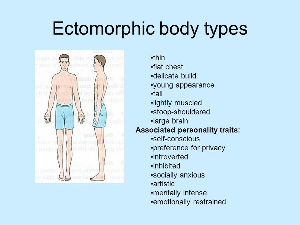 Ectomorphic body types thin flat chest delicate build young appearance tall lightly muscled stoop-shouldered large brain Associated personality traits: self-conscious preference for privacy introverted inhibited socially anxious artistic mentally intense emotionally restrained