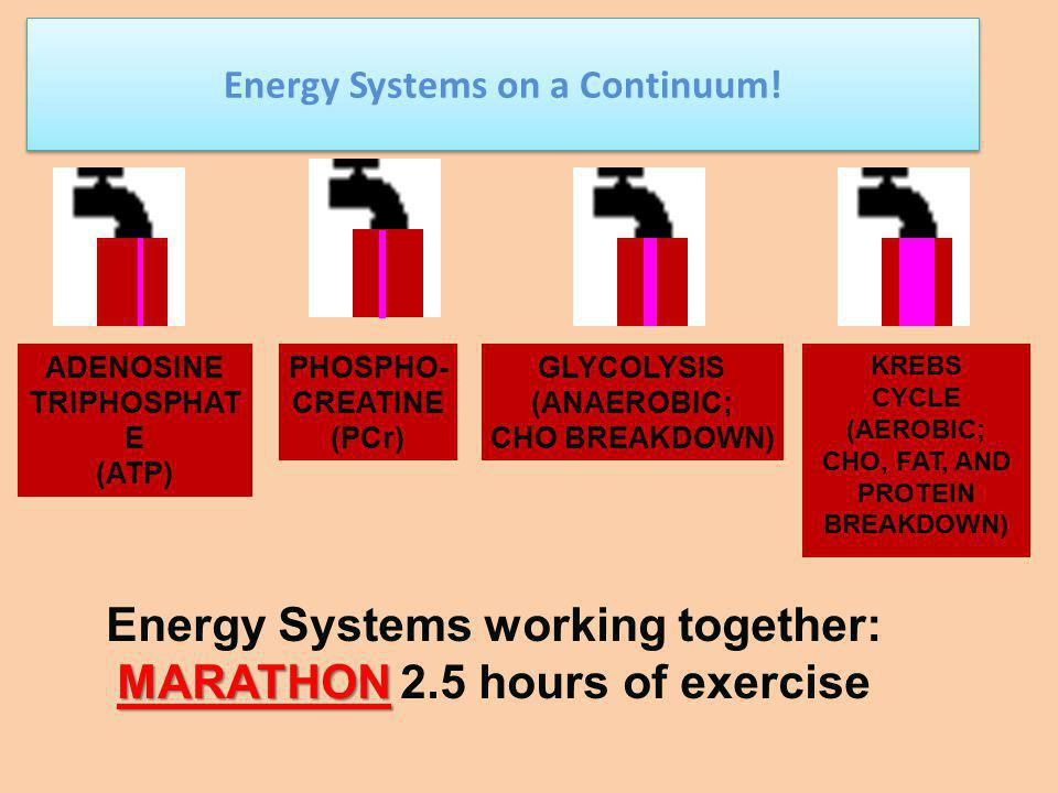 Anaerobic 70-80% Anaerobic 20-30% Aerobic Wt.