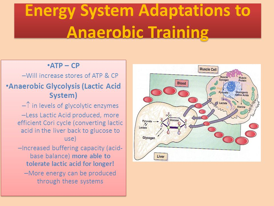 ATP – CP – Will increase stores of ATP & CP Anaerobic Glycolysis (Lactic Acid System) –  in levels of glycolytic enzymes – Less Lactic Acid produced, more efficient Cori cycle (converting lactic acid in the liver back to glucose to use) – Increased buffering capacity (acid- base balance) more able to tolerate lactic acid for longer.