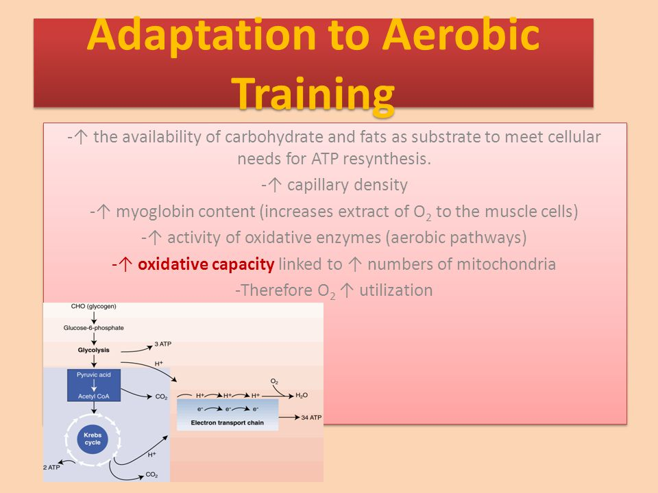 -↑ the availability of carbohydrate and fats as substrate to meet cellular needs for ATP resynthesis.